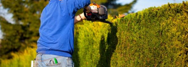Entretien de jardin rennes et en ille et vilaine 35 for Entretien jardin 35